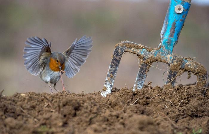 Победитель в категории «Садовые и городские птицы». Автор фотографии: Никос Букас (Nikos Bukas), Греция.