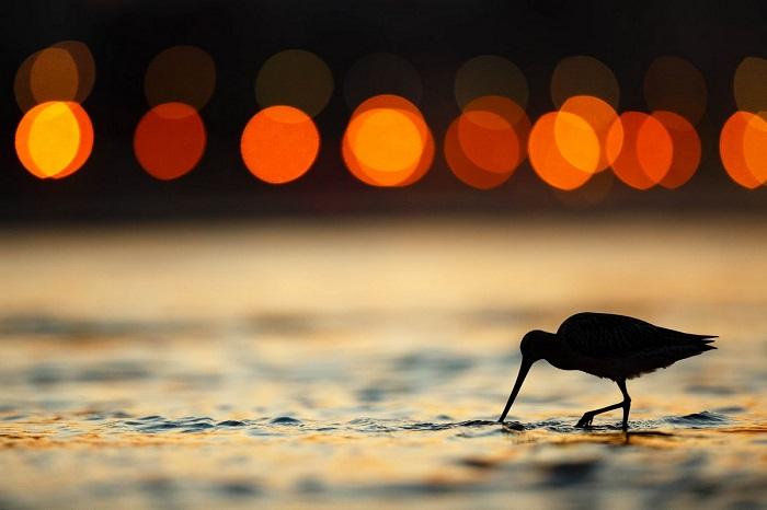 Серебро в категории «Садовые и городские птицы». Автор фотографии: Марио Суарез Поррас (Mario Suarez Porras), Испания.