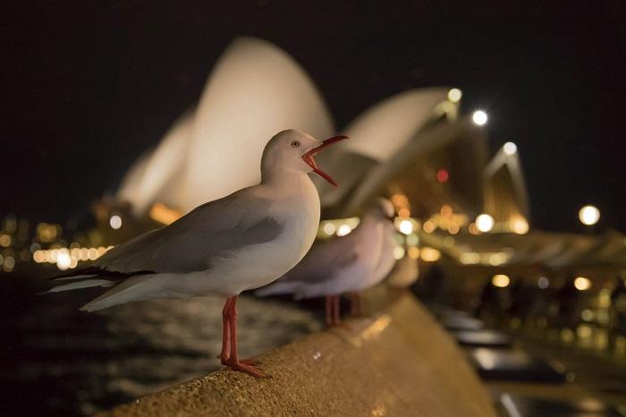 Бронза в категории «Садовые и городские птицы». Автор фотографии: Кевин Софорд (Kevin Sawford), Великобритания.