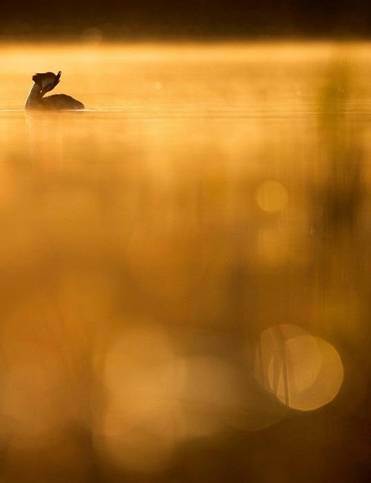 Золото в категории «Юный птичий фотограф года». Автор фотографии: Йохан Карлберг (Johan Carlberg), Швеция.