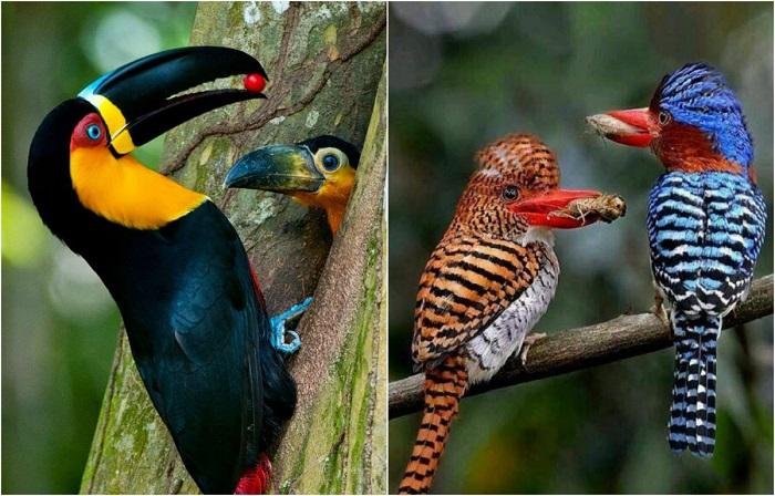 Птицы, которые решили пообедать.