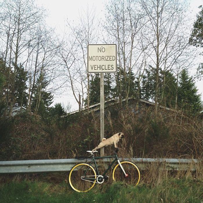 Пес сидит на велосипеде под дорожным знаком.