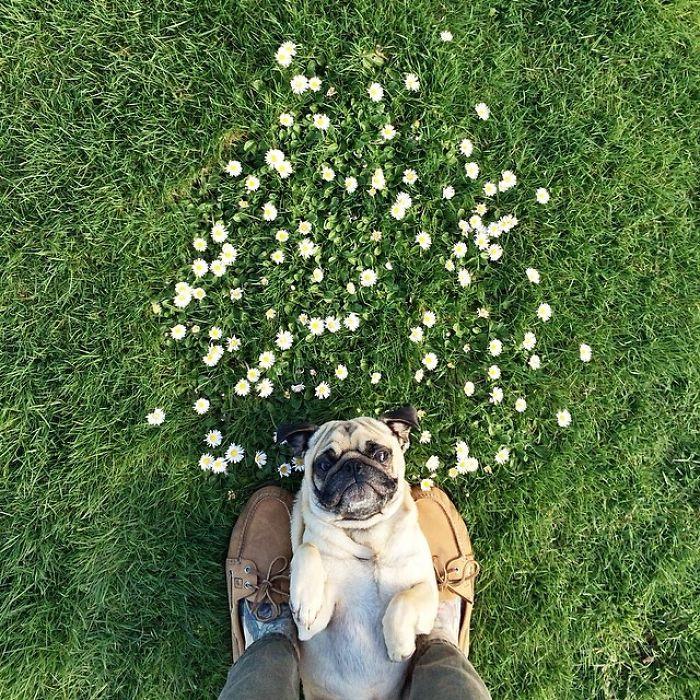 Собака нежится на траве в ореоле полевых цветов.
