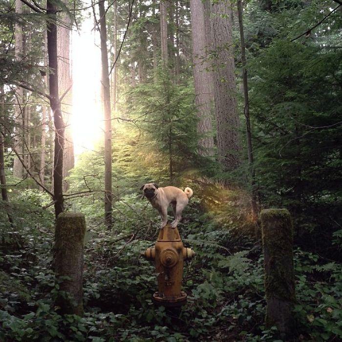 Ранним утром в лесу.