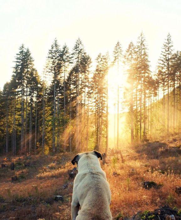 Солнечные лучи пробиваются сквозь деревья и освещают  собаку.
