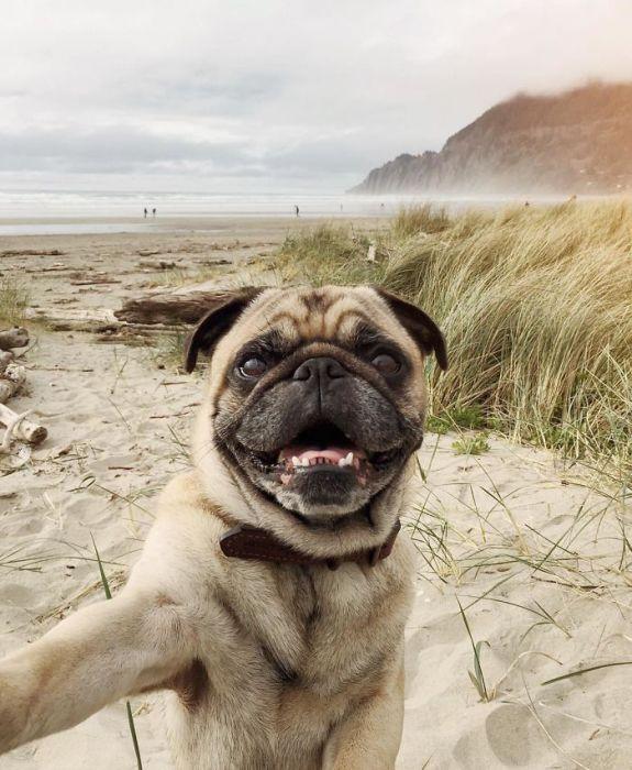 Собака на фоне океана.