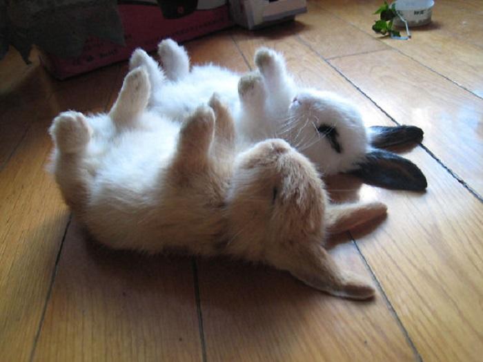 Сладкий сон мальчиков-зайчиков.