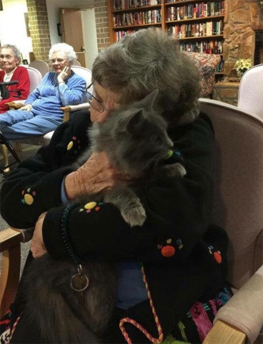 Старая кошка, которую привезли в дом пристарелых.