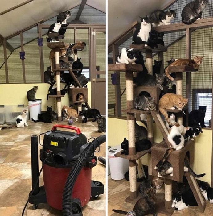 Обитатели кошачьего приюта не доверяют пылесосу.