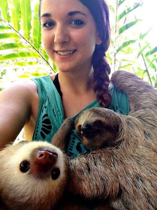 Ухаживая за ленивцами.