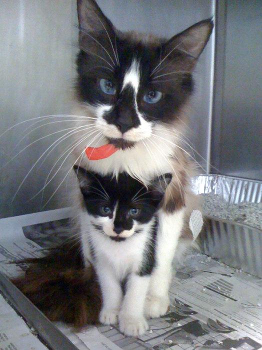 Кошки с изумительными глазами.