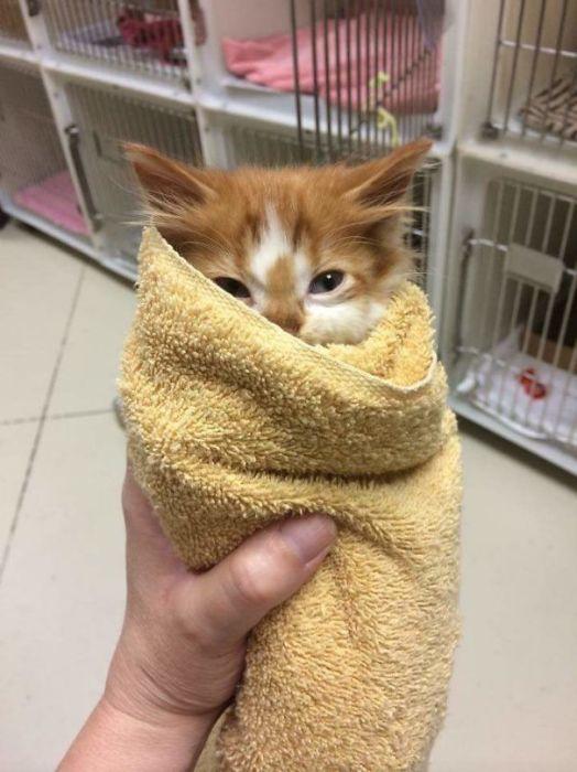 Умилительное фото котёнка из приюта.