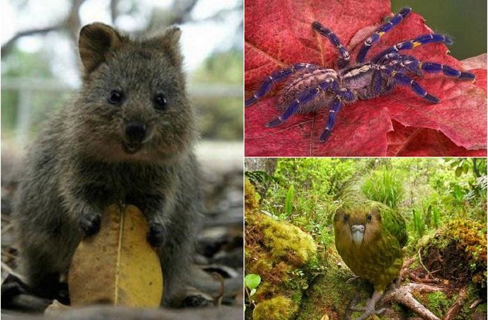 Удивительные создания, словно прилетевшие с других планет.
