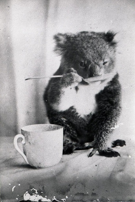 Австралия, 1900 год.