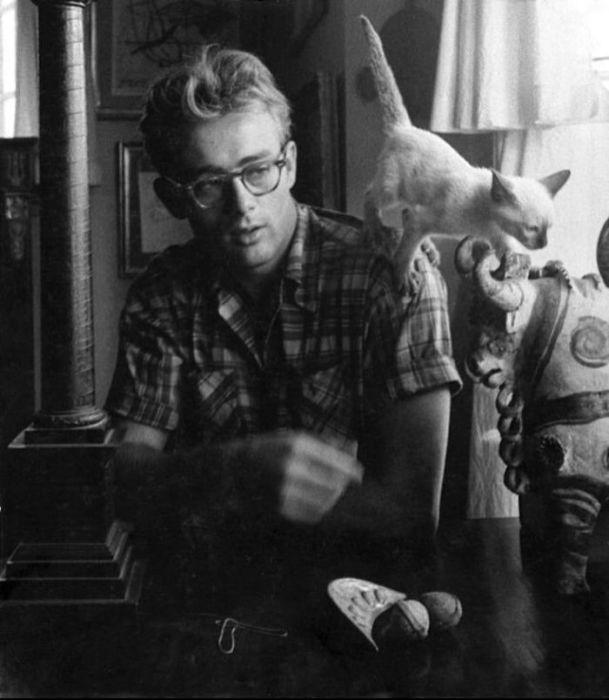 Восходящая звезда кинематографа со своим котом Маркусом в Нью-Йорке в 1954 году.
