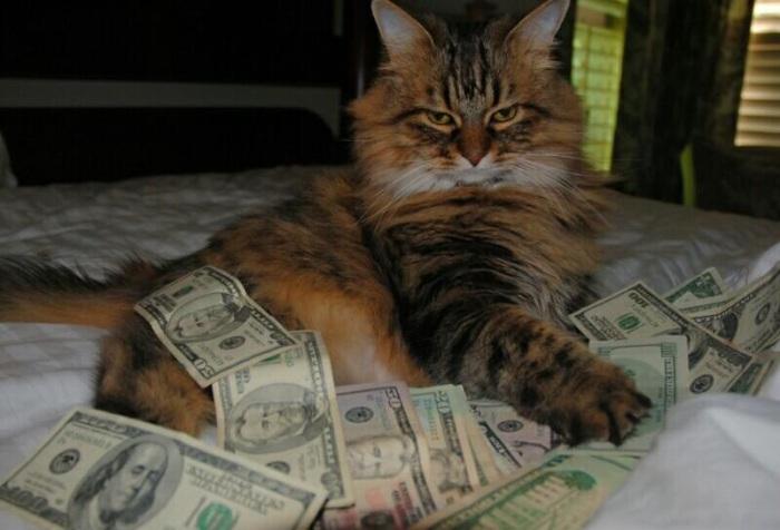 Кот Бен Ри умер в мае 1988 года, он завещал своё состояние ($12,5 млн) кошке Блэки, последней из 15-ти кошек, с которыми он жил в своём особняке.