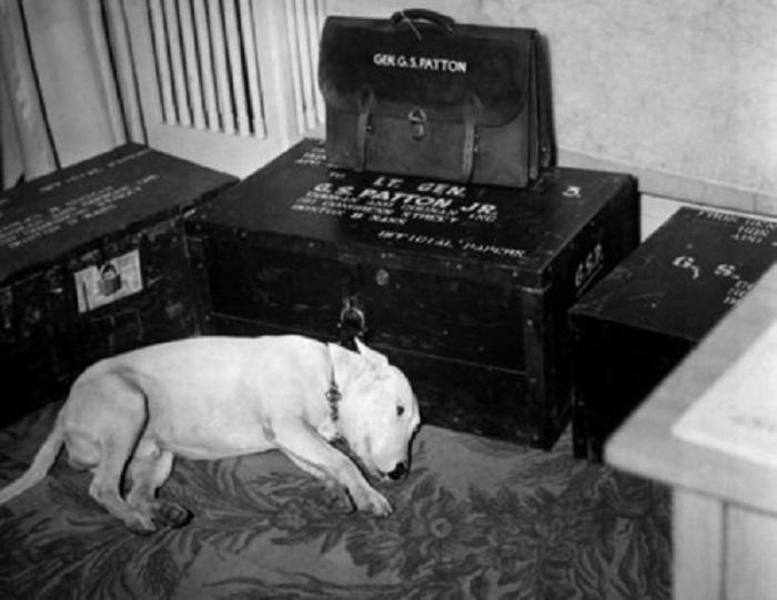 Вилли скорбит о смерти своего хозяина, 1945 год.