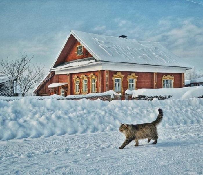 Полосатый кот совершает дневную прогулку по расчищенной от снега деревенской дороге.