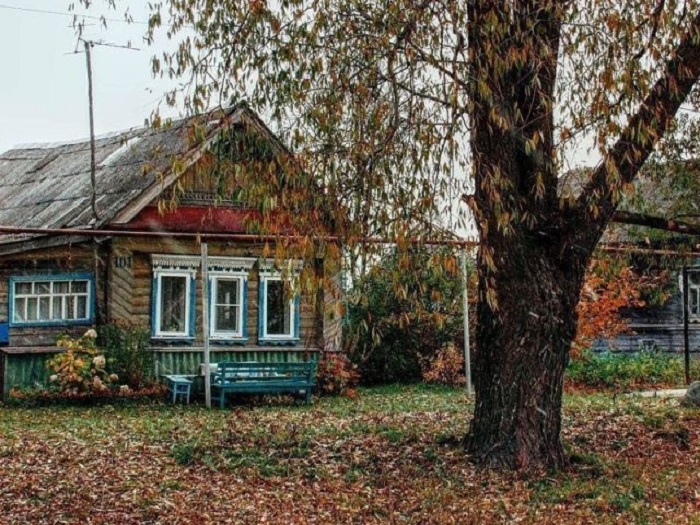 Старая ива у дома сбрасывает пожелтевшую листву, укрывая землю шуршащим одеялом.