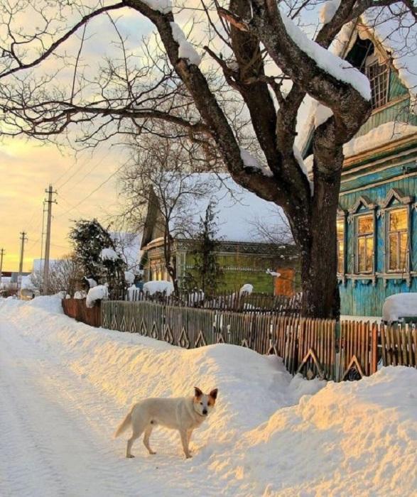 Белый сторожевой пес подозрительно осматривает незнакомого прохожего-фотографа.