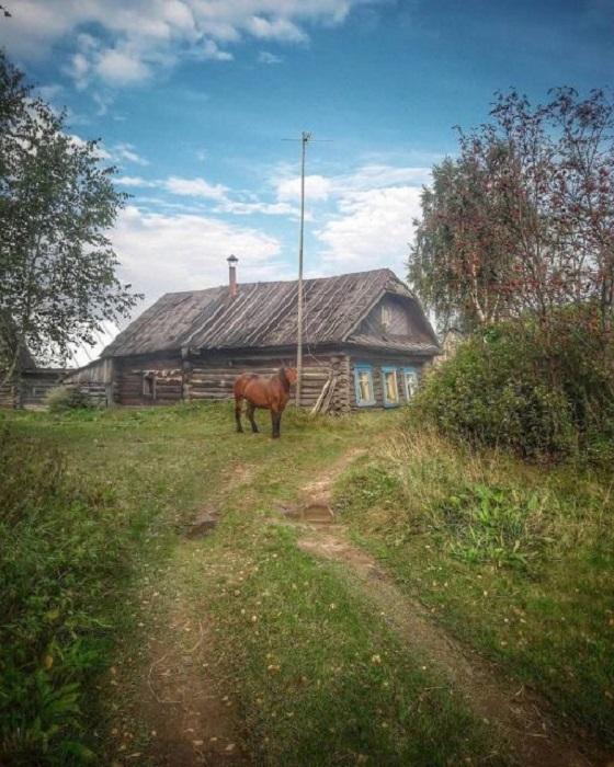 В деревне еще можно встретить лошадей, которые, как и в прошлом, остаются незаменимыми помощниками в домашнем хозяйстве.
