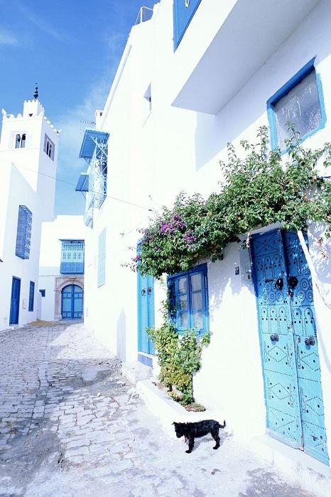 Бело-голубой рай Туниса.