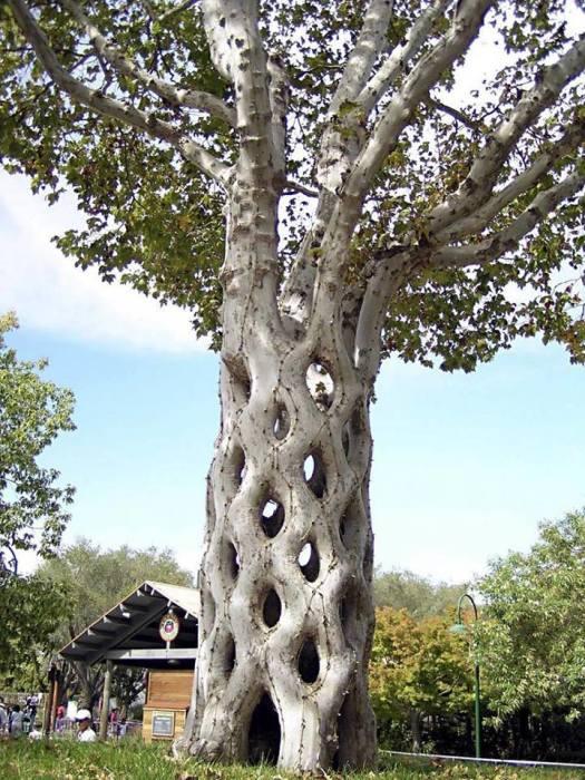 Такое дерево-корзину можно увидеть в парке «Цирк деревьев», созданном канадцем Акселем Эрландсоном.