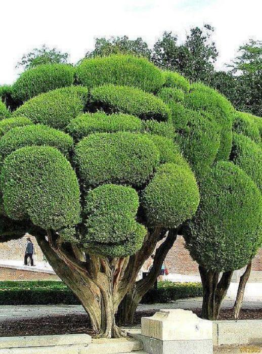 Деревья, которые на вид кажутся плюшевыми – одна из достопримечательностей испанского сада-парка Эль-Рерито.