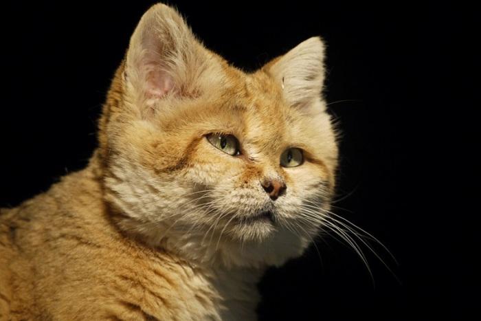 Красивые, грациозные и вечно молодые кошки.
