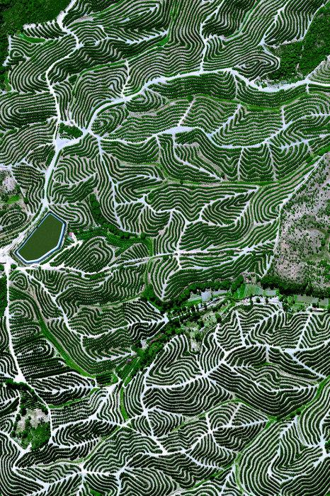 Фруктовые деревья культивируют на холмах Уэльва, Испания.