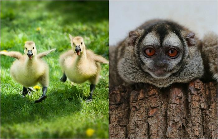 Трогательные фотографии малышей животных.