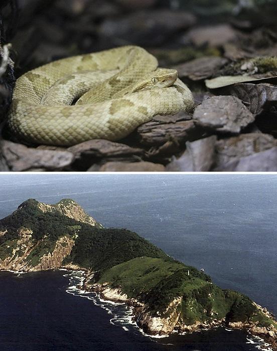 Остров, ставший крупнейшим в мире естественным серпентарием, включен в список самых опасных мест планеты и закрыт для посещения.