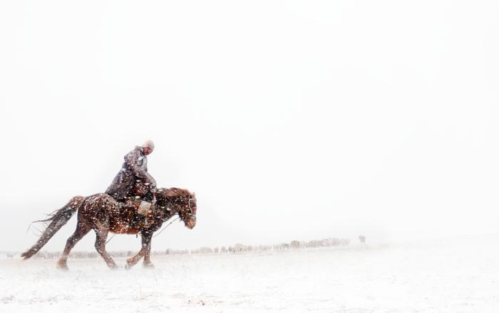 Конный пастух собирает стадо, чтобы избежать потери скота из-за непогоды.