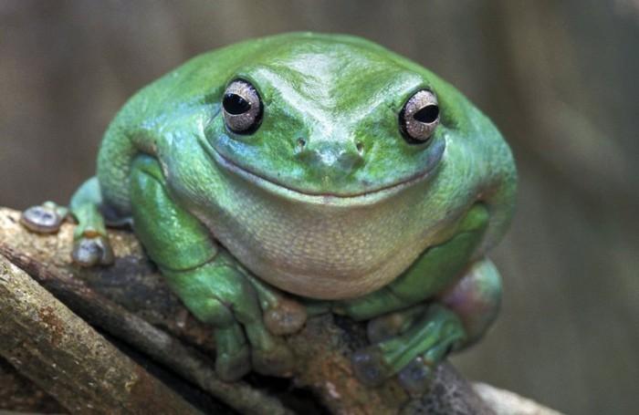 Довольная жизнью лягушка. | Фото: smishok.com