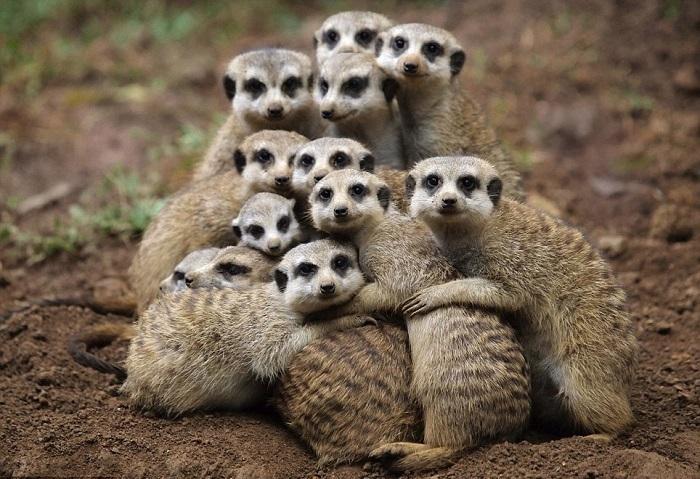Огромное счастье - это когда вся семья вместе.| Фото: relax.ru