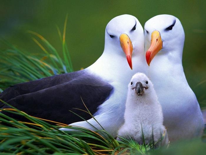Счастливое семейство птиц. | Фото: wallpaperscraft.ru