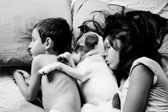Спящие дети, а между ними их дружок. Автор фотографии:Екатерина Шуляк.