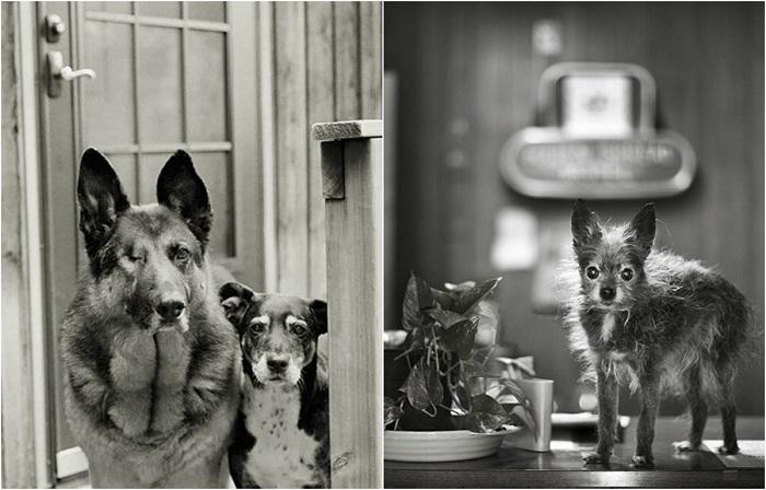 Душевные снимки собак преклонного возраста.