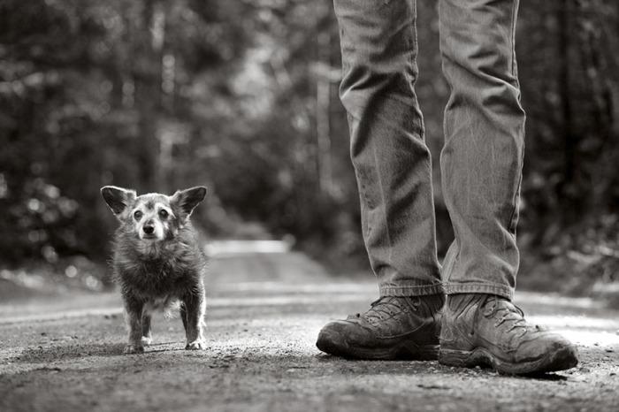 21-летний пес - одна из старейших собак, встретившихся фотографу во время путешествия по штатам.