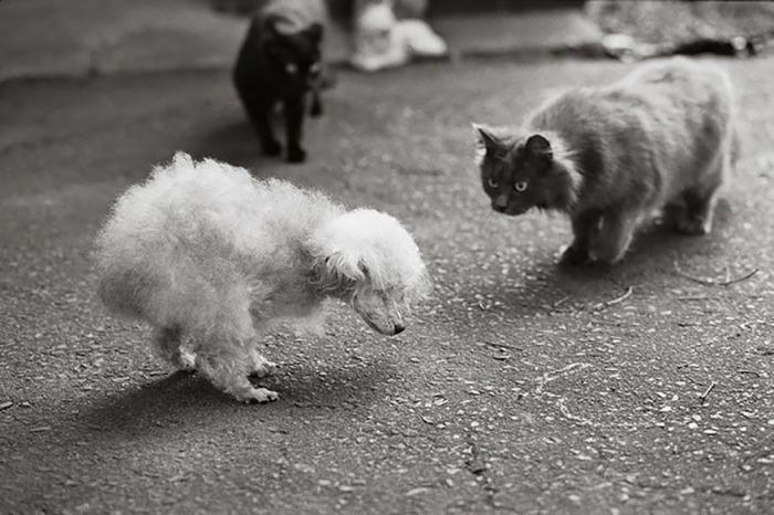 С возрастом 18-летней собачке становится все сложнее передвигаться на трех лапах.