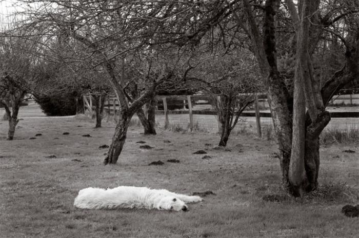 11-летняя овчарка устала искать крота и решила отдохнуть под деревьями.
