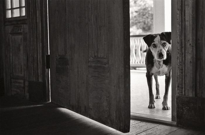 14-летний пес заглядывает в дверь с надеждой найти желающих поиграть с ним.
