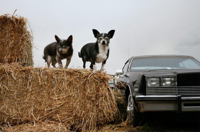 Бриби (21 год) и Нани (19 лет) – любимчики женщины, которая приютила у себя еще нескольких стареющих собак и лошадей.