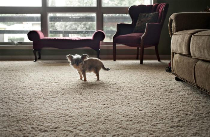 Маленькая 15-летняя собачка занимает огромное место в сердце своих хозяев.