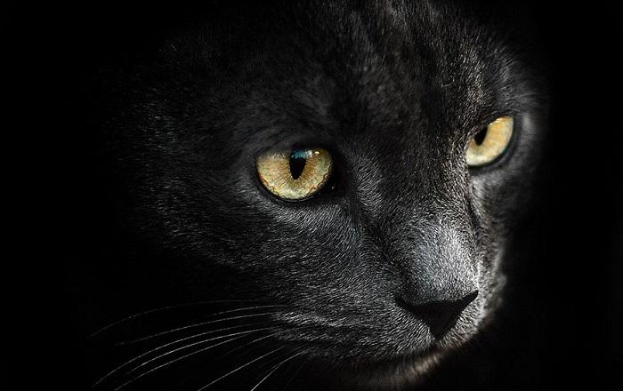 Яркие портреты животных от фотографа Сергея Полюшко.