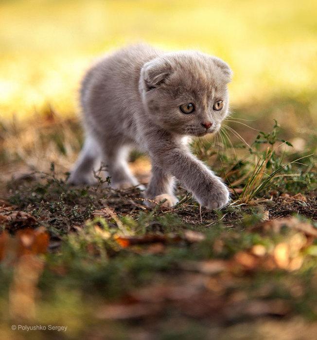 Котёнок, вышедший на первую охоту.