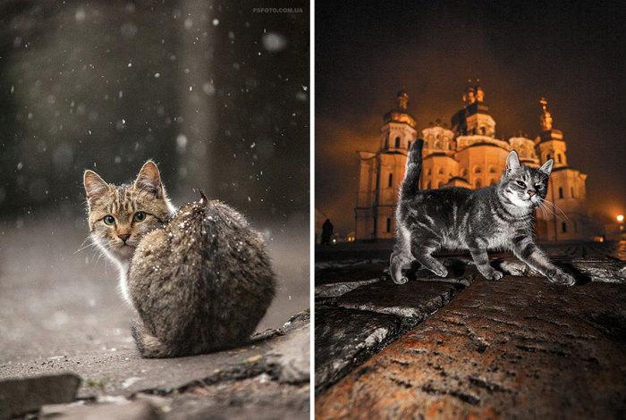 Коты, которые гуляют сами по себе.