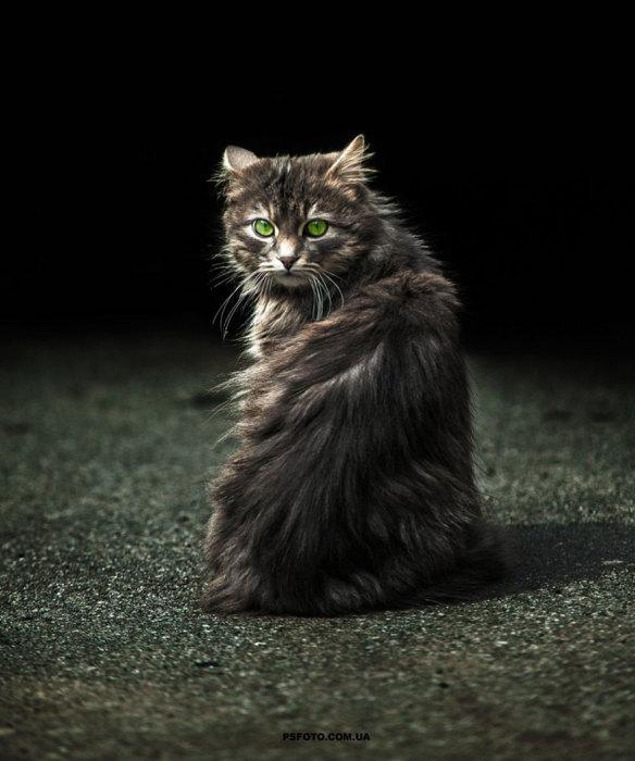 Пушистый и зеленоглазый котейка.