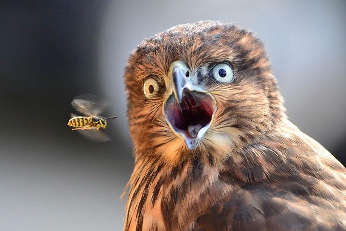 Удивлённые животные, которые в шоке от происходящего вокруг.