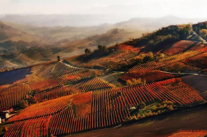 Осенние виноградники около Альбы на холмах Ланге, в Пьемонте. Автор фотографии: Валентина Гальвано (Valentina Galvagno).